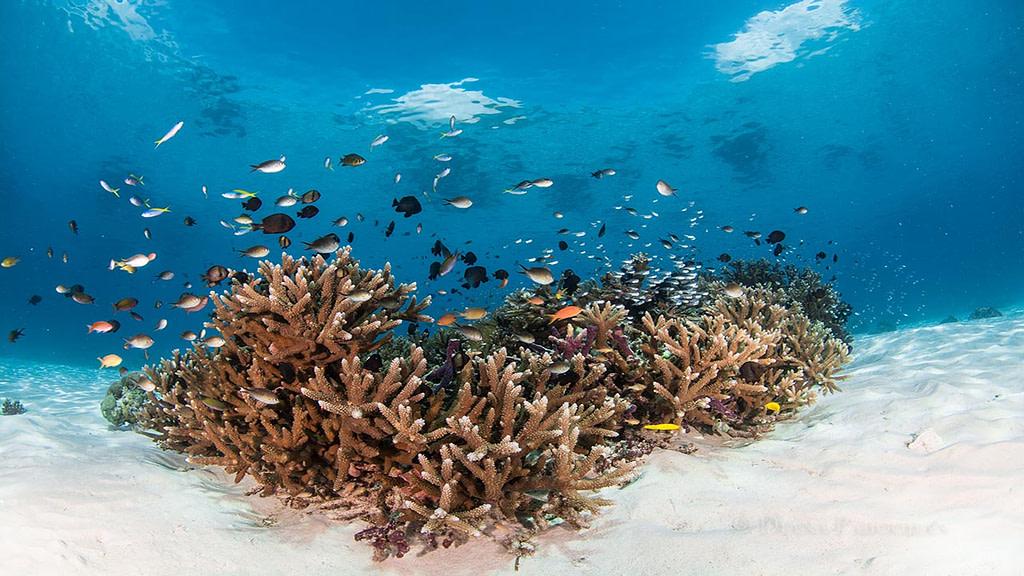 Indonesia Alor Banda sea