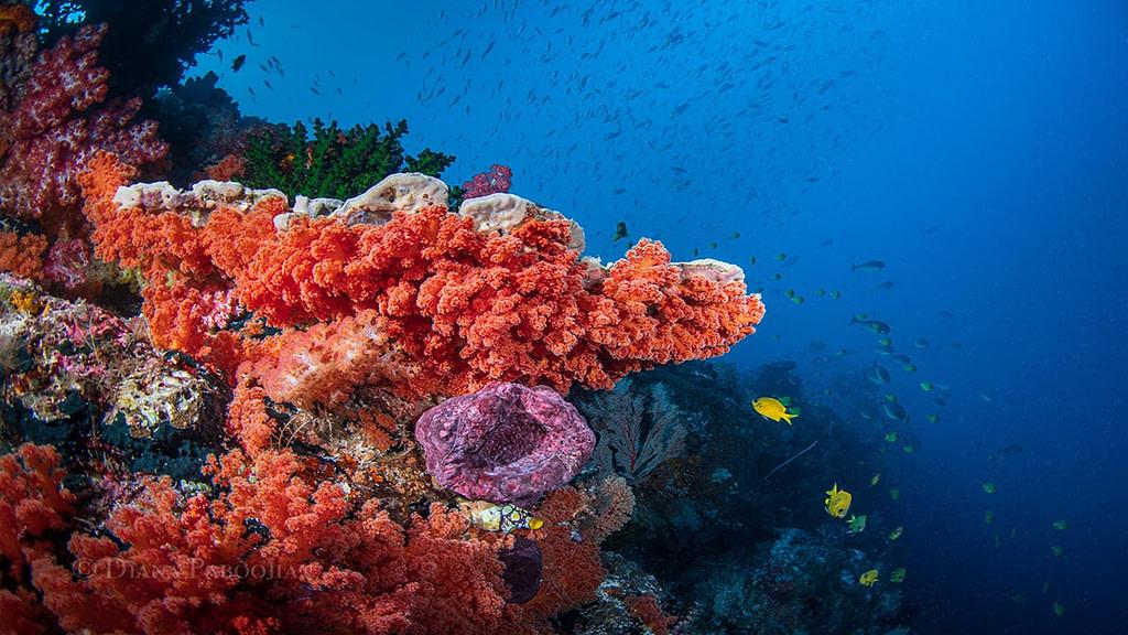 reef in Indonesia forgotten islands